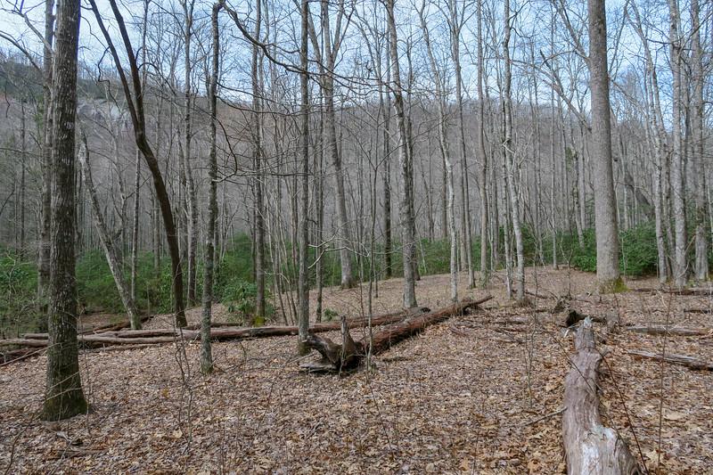 Pilot Cove-Slate Rock Trail -- 3,170'