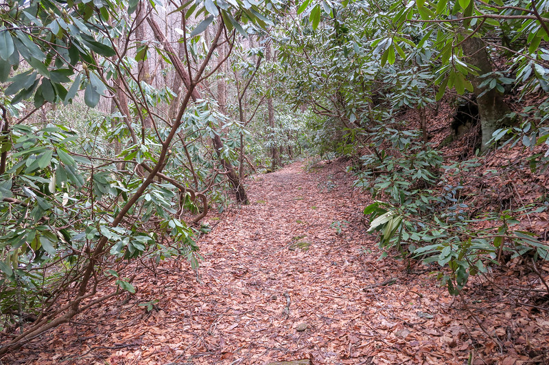 Pilot Cove-Slate Rock Trail -- 2,830'
