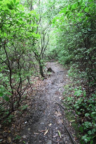 Pilot Cove-Slate Rock Trail -- 3,700'