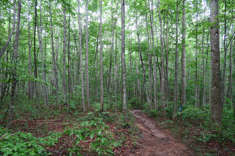Pilot Cove-Slate Rock Trail -- 3,600'