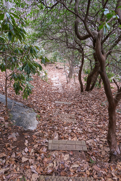 Pilot Rock Extension Trail -- 3,720'