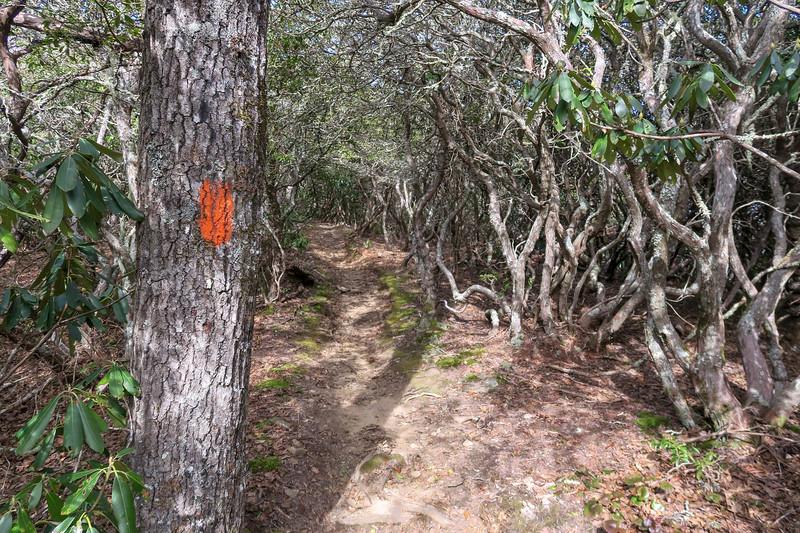 Pilot Rock Trail -- 4,750'