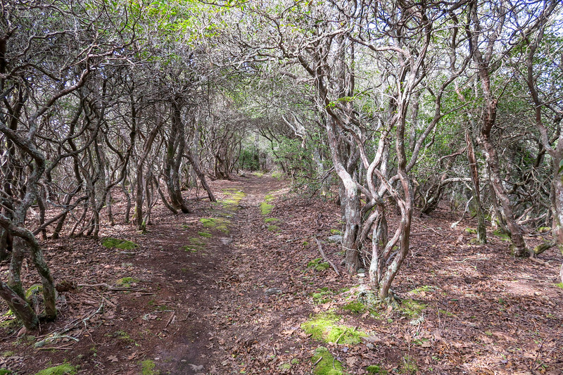 Pilot Rock Trail -- 4,720'