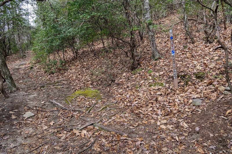 Pilot Rock/Pilot Rock Extension Trail Junction -- 3,720'