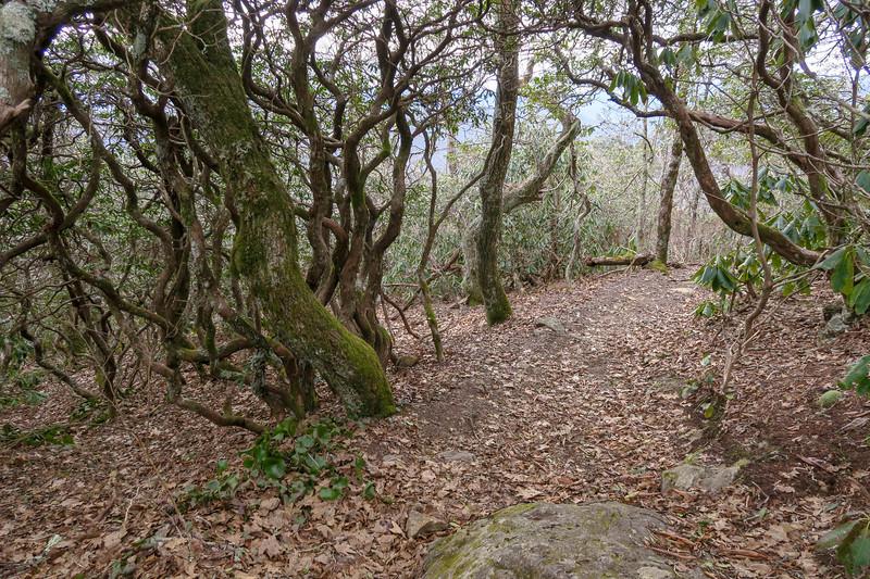 Pilot Rock Trail -- 5,180'