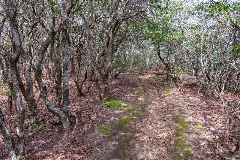 Pilot Rock Trail -- 4,600'