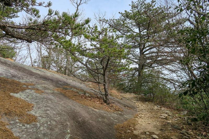 Pilot Rock Trail -- 4,250'