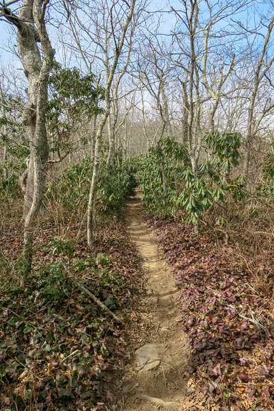 Pilot Rock Trail -- 4,800'