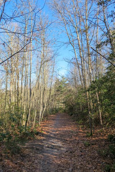 Pine Tree Loop Trail -- 2,300'