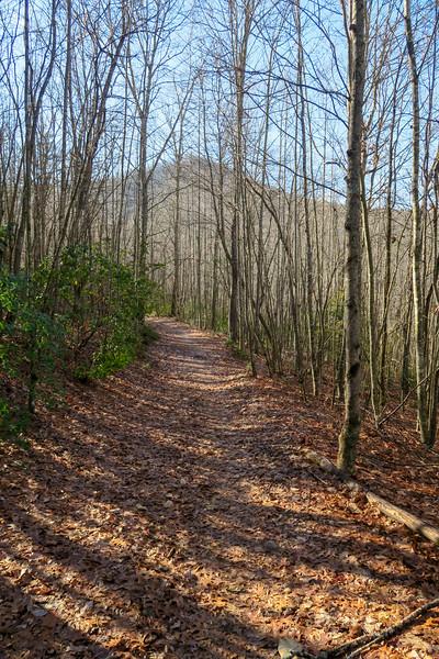 Pine Tree Loop Trail -- 2,380'
