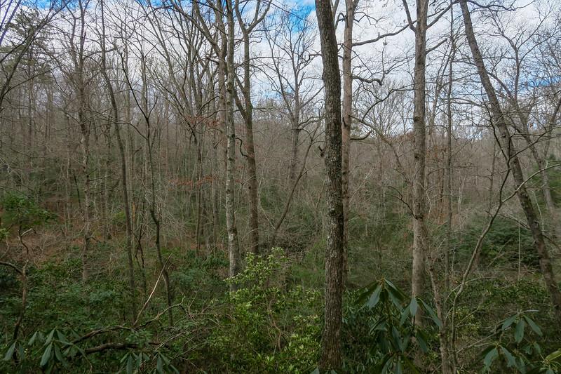 Pine Tree Loop Trail -- 2,200'