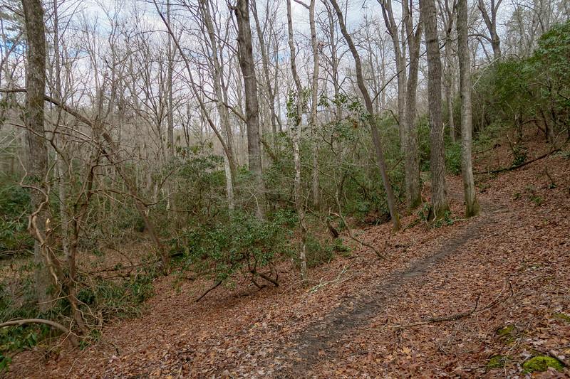Pine Tree Loop Trail -- 2,190'