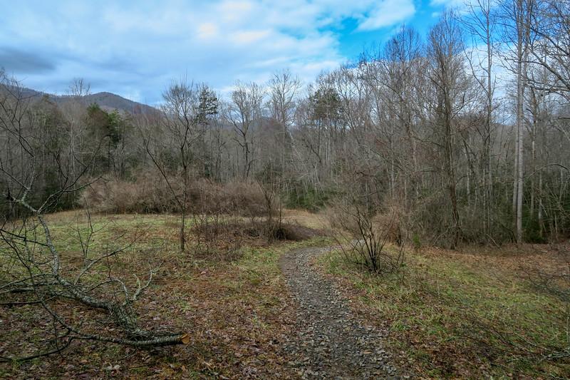 Pine Tree Loop Trail -- 2,240'