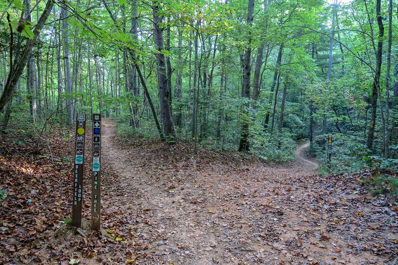Pine Tree Loop/Deerfield Loop Trail Junction -- 2,320'