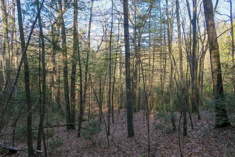 Pine Tree Loop Trail -- 2,390'