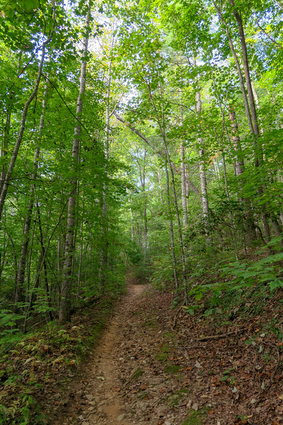Pine Tree Loop/Deerfield Loop Trail -- 2,250'
