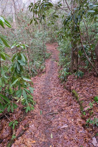 Pine Tree Loop Trail -- 2,220'