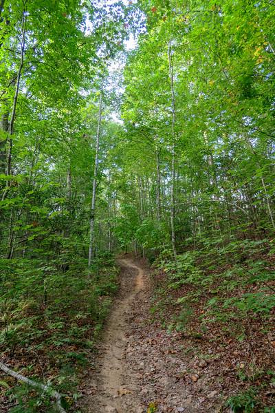 Pine Tree Loop/Deerfield Loop Trail -- 2,280'