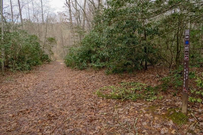 Pine Tree Loop/Pine Tree Connector Trail Junction -- 2,250'