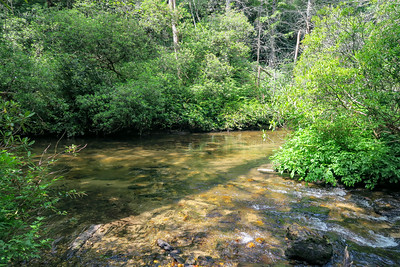 Thompson Creek/South Fork Mills River Confluence -- 3,150'