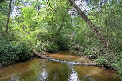 South Fork Mills River -- 3,170'