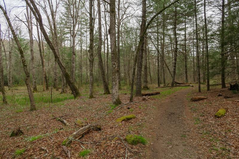 Pink Beds Loop Trail -- 3,190'