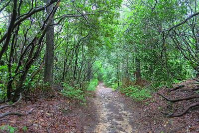 Pink Beds Loop Trail -- 3,240'