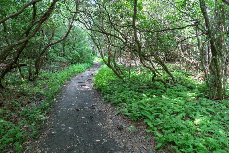 Pink Beds Loop Trail -- 3,180'