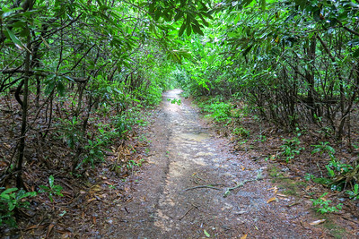 Pink Beds Loop Trail -- 3,270'