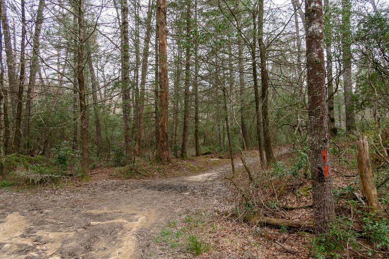 Pink Beds Loop Trail -- 3,200'