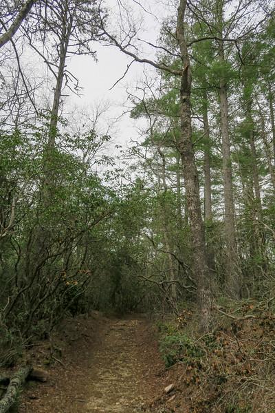 Pink Beds Loop Trail -- 3,230'