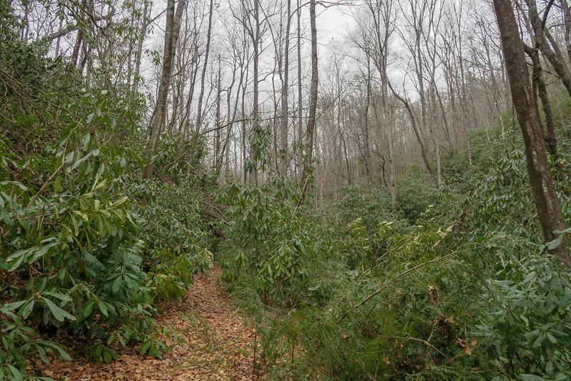 Poundingmill Trail -- 2,500'