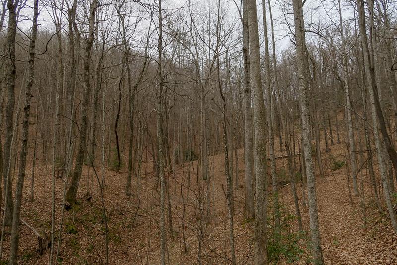 Poundingmill Trail -- 2,960'