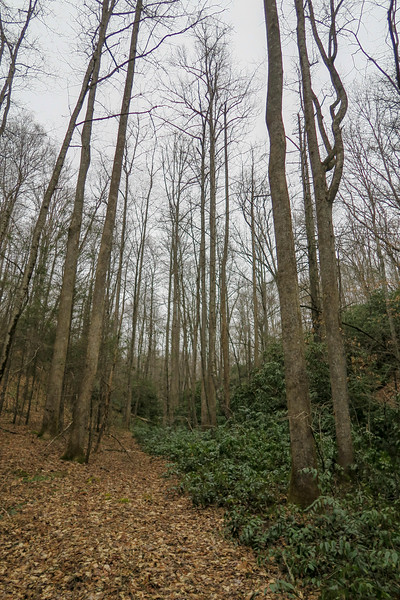 Poundingmill Trail -- 2,650'