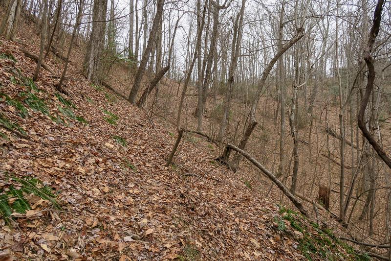 Poundingmill Trail -- 3,050'