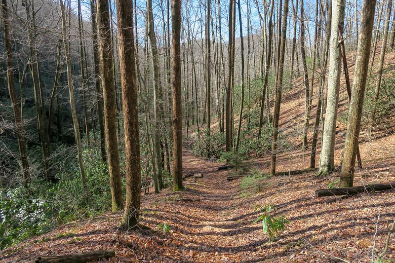 Pressley Cove Trail -- 2,900'