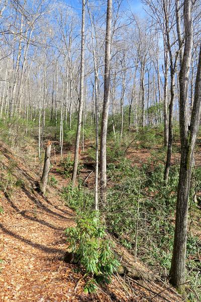 Pressley Cove Trail -- 2,500'