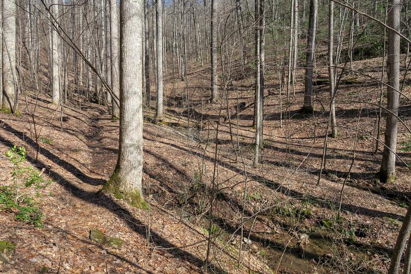 Pressley Cove Trail -- 3,230'