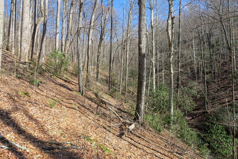 Pressley Cove Trail -- 3,150'