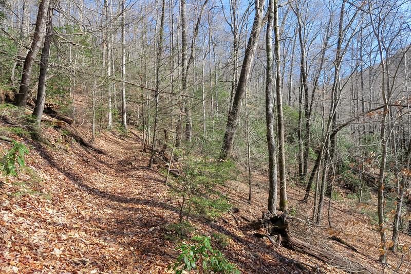Pressley Cove Trail -- 2,440'