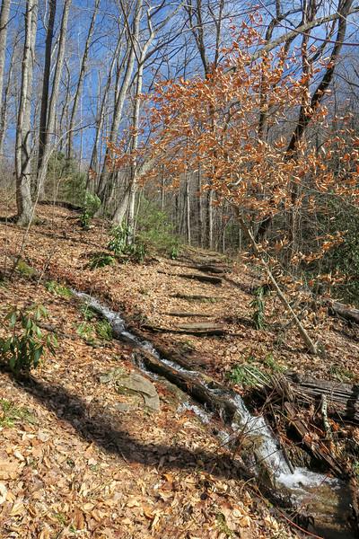 Pressley Cove Trail -- 3,200'