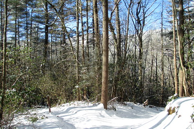 Rainbow Falls Trail @ Stairway Falls Spur Path -- 2,570'