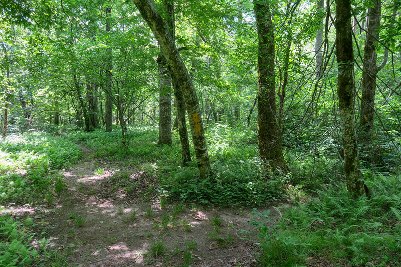 Riverside Trail -- 2,280'