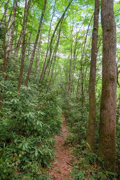 Riverside Trail -- 2,310'