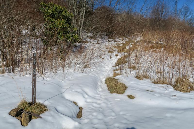 Sam Knob Summit/Sam Knob Trail Junction -- 5,660'