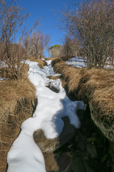 Sam Knob Summit Trail -- 6,000'