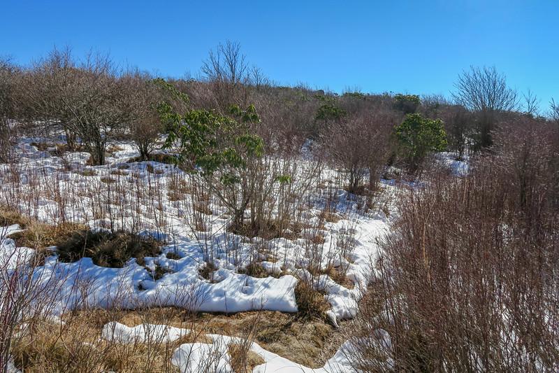 Sam Knob Summit Trail (South Summit) -- 6,020'