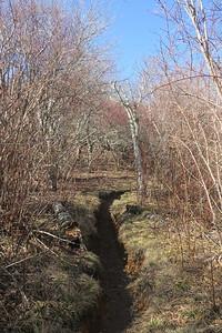 Sam Knob Summit Trail -- 5,670'