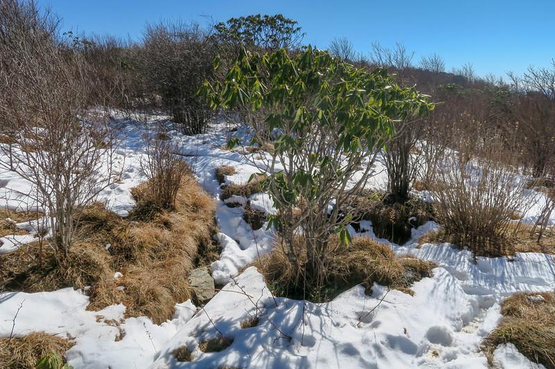 Sam Knob Summit Trail (North/South Summit Split) -- 6,020'
