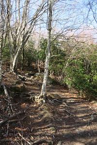 Sam Knob Summit Trail -- 5,700'